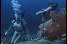 Jacqueline Bisset Diving In The Deep